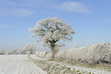 View of arable farmland with track  hedgerow and trees covered with rime frost  Norfolk  England