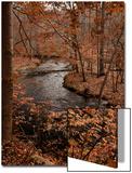 River in autumn woodland habitat  Cross River  Ward Poundridge County Park  Salem