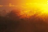 View of swamp habitat at sunrise  Everglades  Florida  USA