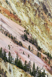 View of canyon slope with oxidizing rocks  Grand Canyon of Yellowstone  Yellowstone   Wyoming