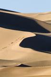View of sand dunes in desert habitat  Khongoryn Els Sand Dunes  Southern Gobi Desert  Mongolia