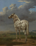 "The ""Piebald"" Horse  1650-54"