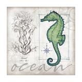 Coastal Seahorse