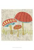 Ada's Mushrooms