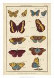 Histoire Naturelle Butterflies IV