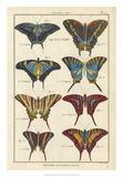 Histoire Naturelle Butterflies VI
