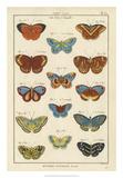 Histoire Naturelle Butterflies I