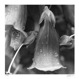 Botanical Study 18