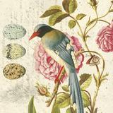 Bird Study 1
