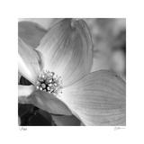 Botanical Study 9