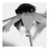 Botanical Study 11