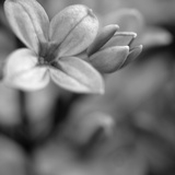 Botanical Study 4