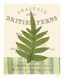 British Fern I