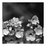 Botanical Study 13