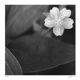 Botanical Study 17