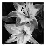 Botanical Study 5