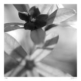 Botanical Study 8