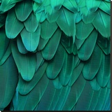 Feathered Friend - Aqua