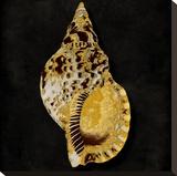 Golden Ocean Gems III
