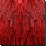 Feathered Friend - Red