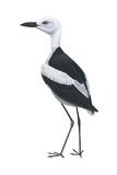 Crab Plover (Dromas Ardeola)  Birds