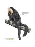 Male Pale-Headed Saki (Pithecia Pithecia)  Monkey  Mammals