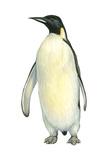 Emperor Penguin (Aptenodytes Forsteri)  Birds