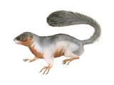 Prevost's Squirrel (Callosciurus Prevosti)  Tricolored  Squirrel  Mammals