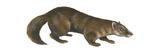 Sable (Martes Zibellina)  Weasel  Mammals
