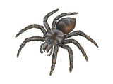 Bird-Eating Spider (Theraphosa)  Arachnids