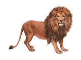 African Lion (Felis Leo Massaica)  Mammals