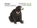Sun Bear (Helarctos Malayanus)  Mammals