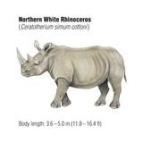 Northern White Rhinoceros (Ceratotherium Simum Cottoni)  Mammals