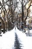 Snowy road Central Park