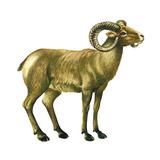 Wild Sheep (Ovis Canadensis)  Mammals