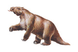 Megatherium  Extinct Ground Sloth  Mammals