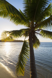 Palm Tree on Beach at Hauru Point  Mo'Orea  Society Islands  French Polynesia