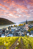 Sunrise over Vineyards  Bacharach  Rhineland-Palatinate  Germany