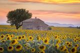 Provence, Valensole Plateau, France Papier Photo par Francesco Riccardo Iacomino