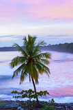 Costa Rica  Cahuita  Cahuita National Park  Lowland Tropical Rainforest  Caribbean Coast  Dawn