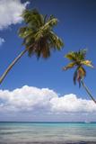 Dominican Republic  Punta Cana  Parque Nacional Del Este  Saona Island  Catuano Beach