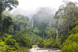 Mist and River Through Tropical Rainforest  Sabah  Borneo  Malaysia