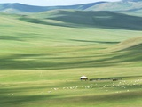 Evenk people's summer pasture  Old Barag Banner  Hulunbuir  Inner Mongolia Autonomous Region  China