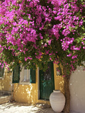 House Covered in Bougainvillea  Paxos  the Ionian Islands  Greek Islands  Greece  Europe