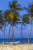 Dominican Republic  Punta Cana  Cap Cana Beach