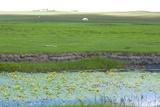 Hulun Buir Grassland  Manzhouli  Hulunbuir  Inner Mongolia Autonomous Region  China