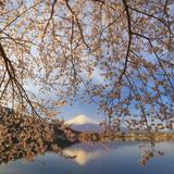 Japan  Yamanashi Prefecture  Kawaguchi-Ko Lake  Mt Fuji and Cherry Blossoms