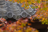 Japan  Kyoto  Higashiyama District  Sho-Ren-In Temple  Roof Top and Autumn Foliage
