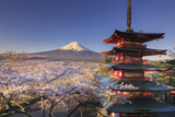 Japan  Yamanashi Prefecture  Fuji-Yoshida  Chureito Pagoda and Mt Fuji During Cherry Blossom Season