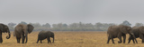 African Elephant (Loxodonta Africana) at Savuti Game Reserve  Botswana
